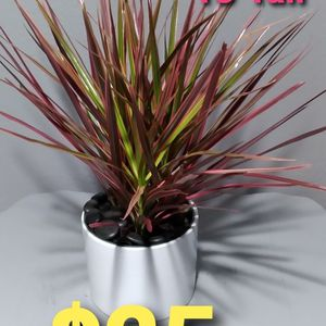 Real Dracaena Colorama Pink Plant includes Ceramic Pot Perfect For 🎁😊🏠 for Sale in Stanton, CA