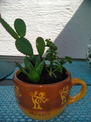 Succulent mug!! 3 plants for Sale in Ocoee, FL