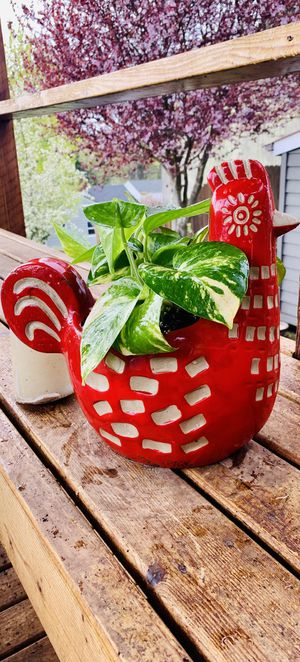 Live indoor Golden Pothos house plant in a textured ceramic chicken animal planter flower pot—firm price for Sale in Seattle, WA