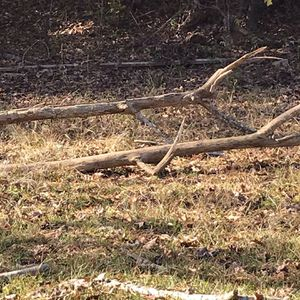 Free Firewood For Those Cold Winter Nights for Sale in Raleigh, NC