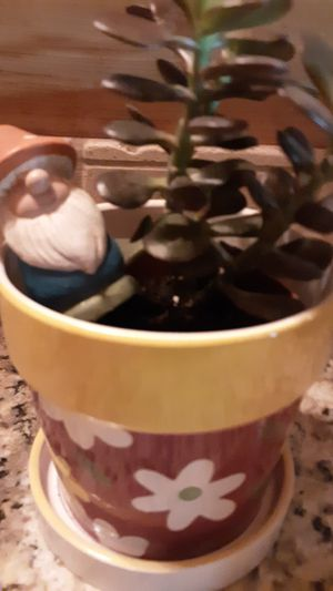 Healthy Jade plant/ Pretty flower Pot & Knome for Sale in Folsom, CA
