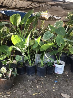Plants for Sale in Fresno, CA