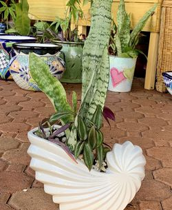 Sea Shell Planter With Snake Plant & Wandering Jew Plant🪴 for Sale in Hialeah,  FL