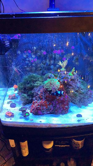 Coral frags for Sale in Longview, TX