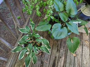 Plants for Sale in Fort Washington, MD