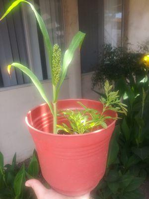 Flower pot for Sale in Oxnard, CA