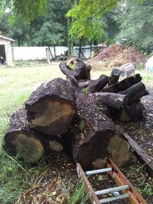 Free wood for Sale in Lutz, FL