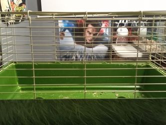 Giant 2foot Rat Cage Hamster Cage for Sale in Los Angeles,  CA