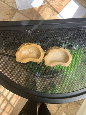 Two Thrive hermit crab food and water dishes for Sale in Elkridge, MD