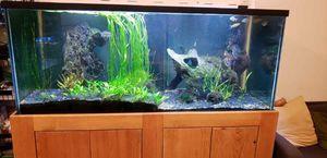 Beautiful 150 Gallon Aquarium for Sale in San Diego, CA