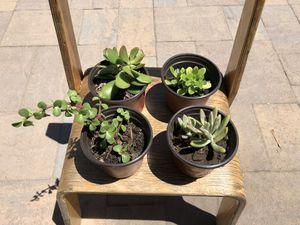 Lindas plantitas / beautiful mini plants / succulent plants / decor home for Sale in Ontario, CA