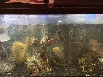50 Gallon Fish Tank w/ Accessories for Sale in Ripon,  CA