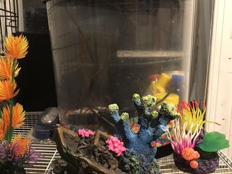 Fish Tank for Sale in Gastonia,  NC