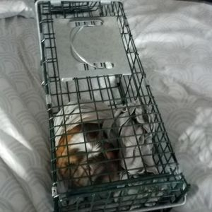 Travel Or Humane Cage 8 Inches Tall & 26 Inches Long for Sale in Gilroy, CA