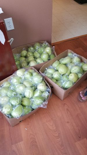 Chayote for Sale in Ruskin, FL