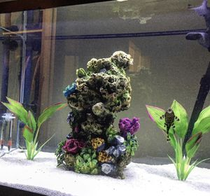 Aquarium 20 Gallon, Canister Filtration System for Sale in San Diego, CA