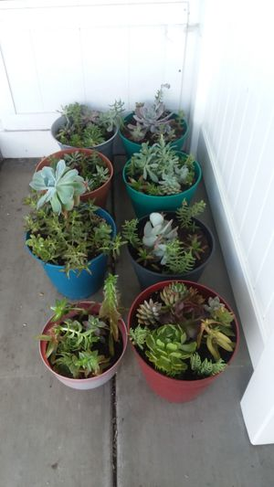 Variety succulents prices vary for Sale in Riverside, CA