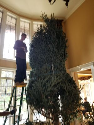Fresh cut CHRISTMAS TREES Free Delivery! for Sale in Charlotte, NC