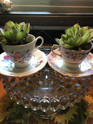 Adorable vintage tea cup with succulent. for Sale in West Linn, OR