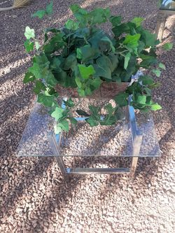 Fake Plant for Sale in Marana,  AZ
