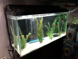 40 Gallon Fish Tank with Stand for Sale in Baldwin Park, CA