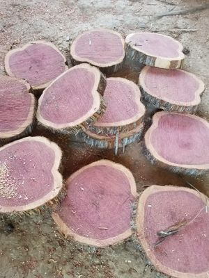 red cedar slices for Sale in Houston, TX
