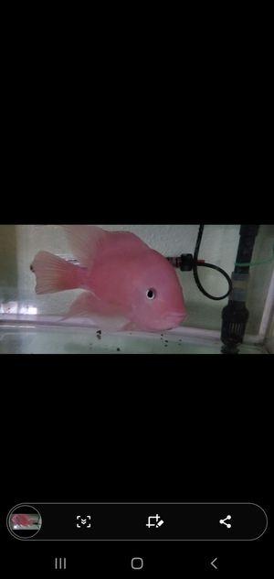 Srm fish tank aquarium for Sale in City of Industry, CA