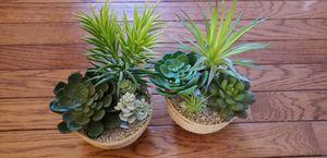 Decorative plants for Sale in Arlington, VA