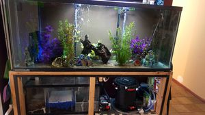 170 gallon fishtank with all accessories for Sale in Brooklyn, NY