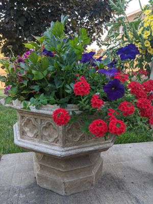 flower pot with plants for Sale in Frankfort, IL