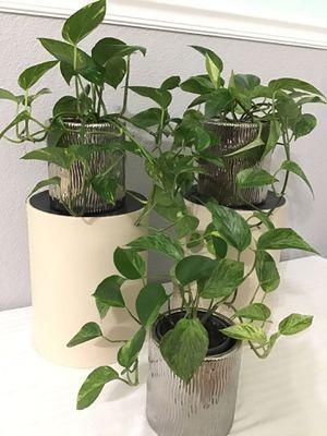 Discount Plants for Sale in Acworth, GA
