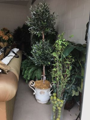 Topiary trees in white pot very nice for Sale in Davenport, FL