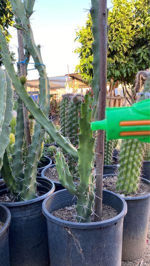 Cactus for Sale in Wildomar, CA