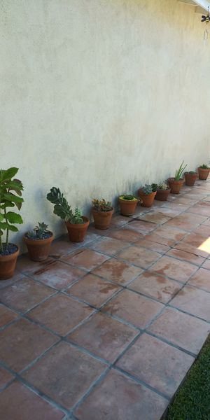 Plants for Sale from $5.00 each for Sale in Downey, CA