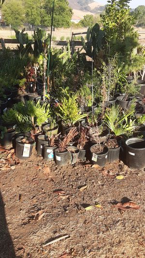 Plants for Sale in San Jose, CA