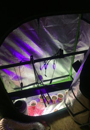 Vivo sun grow tent, lights carbon filter, fan, and tubing for Sale in San Lorenzo, CA