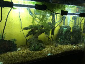 Fish tank 20 gallons for Sale in Cleveland, OH