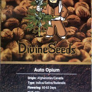 Bird 🦅 Seeds Divine 🙆♀️ Seeds for Sale in Arvin, CA