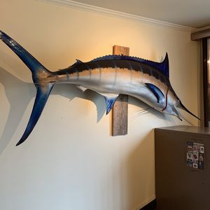 Mounted Marlin for Sale in Daly City, CA