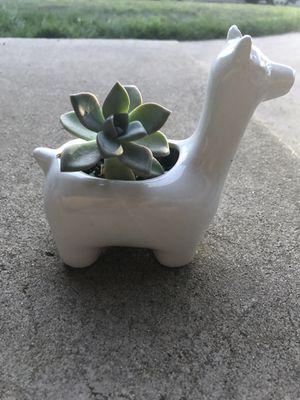 Succulent for Sale in Manteca, CA