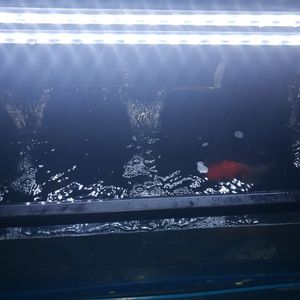 Fish Tank , Aquarium for Sale in Springfield, VA