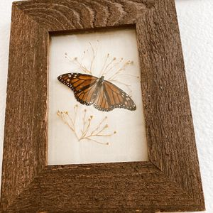Framed Butterfly for Sale in Nipomo, CA