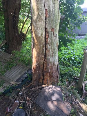 Free fire wood for Sale in Pottsville, PA