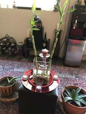 Bamboo Plants for Sale in Chandler, AZ