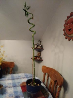 House Plant bamboo for Sale in Cleveland, OH