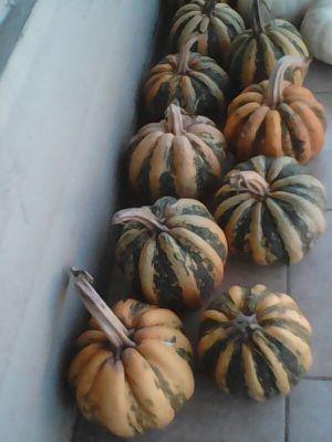 Eatable pumpkins/calabasas para comer for Sale in AR, US