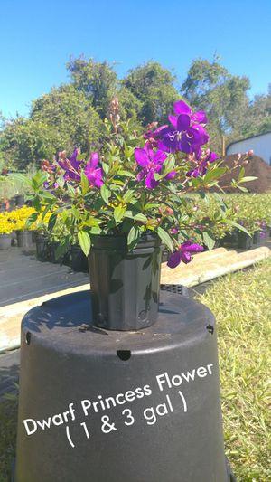 Landscaping Plants for Sale in Sebring, FL