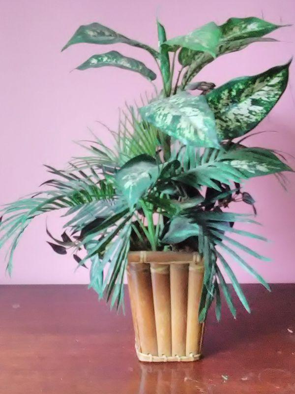 Artificial Silk Plant in Bamboo Pot