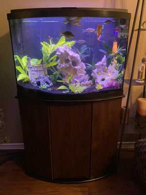 Bowfront Aquarium & Stand 36 Gallon for Sale in Phoenix, AZ