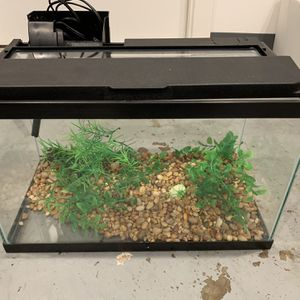Fish Tank With Koi Betta for Sale in San Francisco, CA